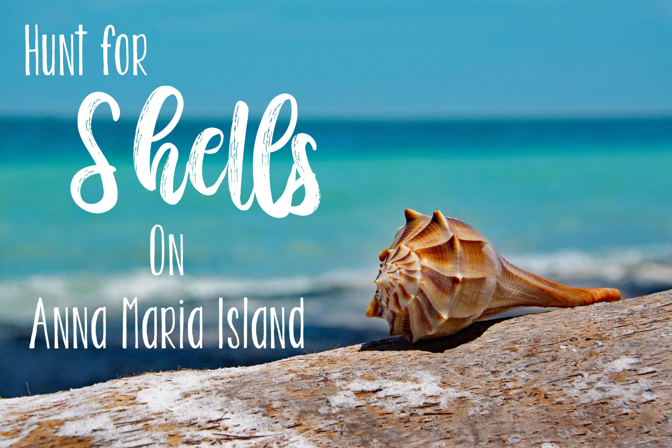 Hunt for Shells on Anna Maria Island