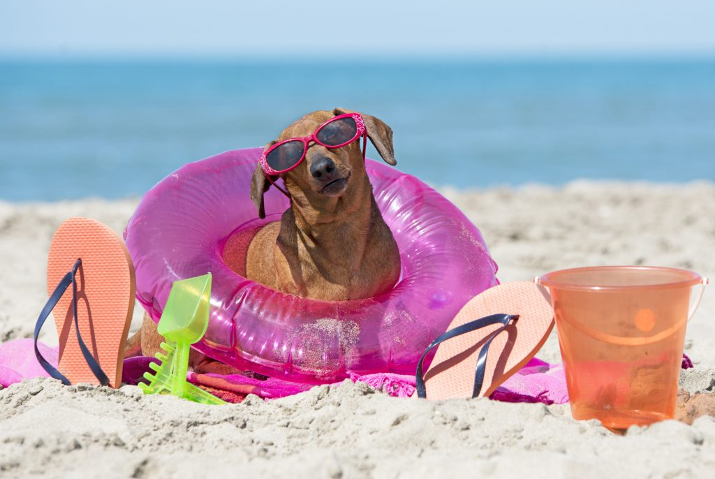 Bring Your Dog on Your Vacation to Anna Maria Island