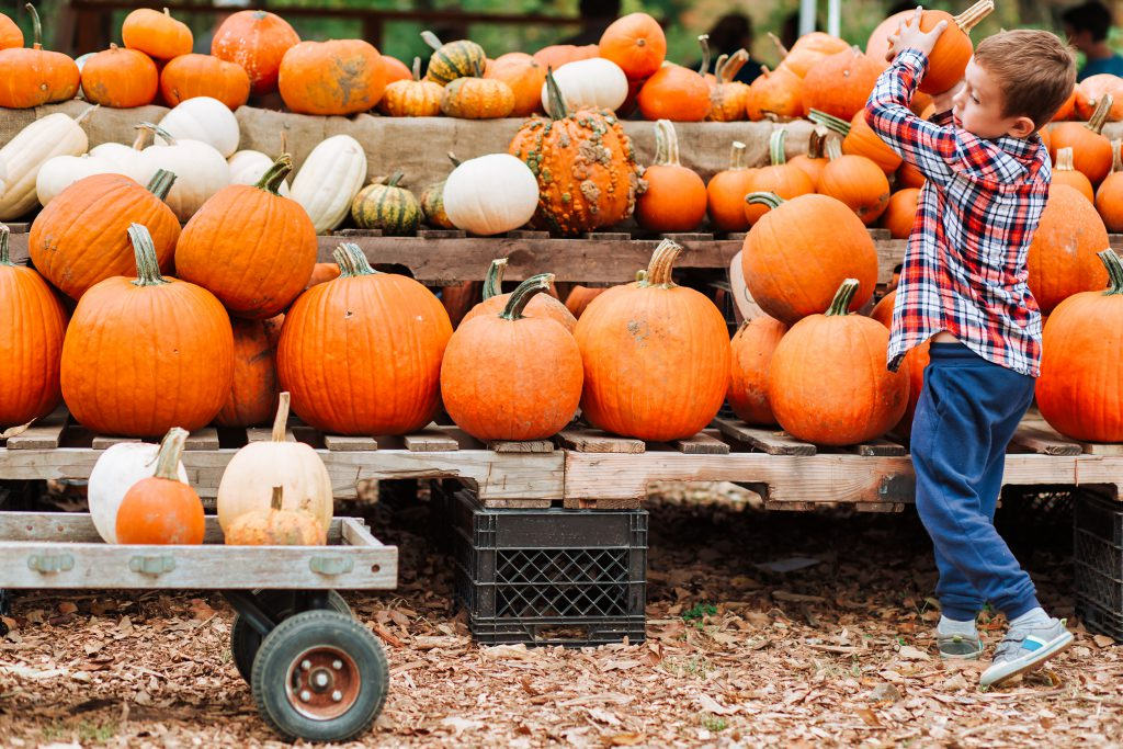 boy picks pumpkin at the farmers market. The person in motion, defocused.